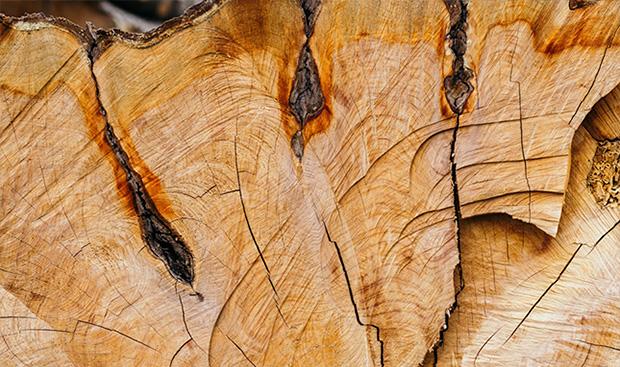 Corteza de un árbol